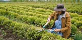 Top 10 green job fields